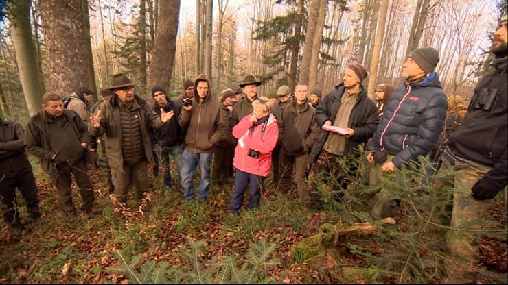 Ekolodzy i leśnicy chcą się dogadać ws. wycinki drzew w Puszczy Karpackiej