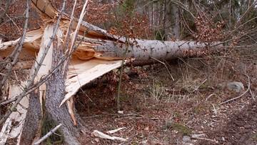 Zerwane dachy, powalone drzewa i brak prądu. Wichury nad Polską