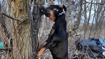 Pies powieszony na drzewie. Sprawca bestialskiego mordu poszukiwany