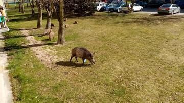 Dzikie zwierzęta w mieście. Czy dokarmianie ich to coś złego?