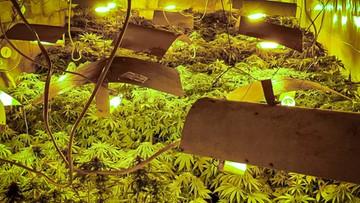 Plantacja marihuany ukryta pod ziemią. Podejrzany wyskoczył przez okno