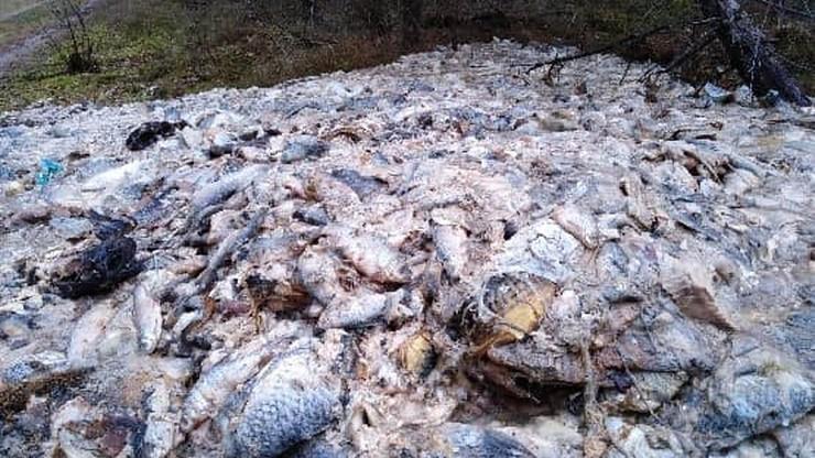 700 kilogramów ryb podrzuconych w lesie. Filety, kręgosłupy, wnętrzności i płetwy