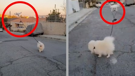 Drony wyprowadzają psy, gdy ich właściciele odbywają kwarantannę (film)